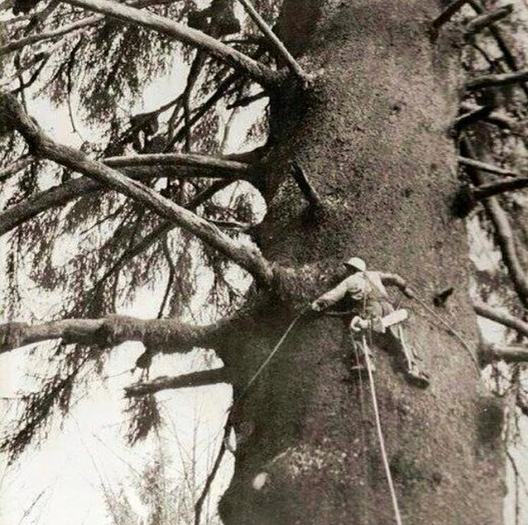 Tree Arborist Sydney