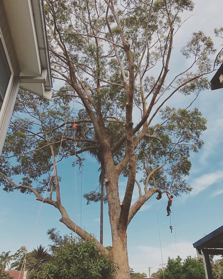 Tree pruning Engadine