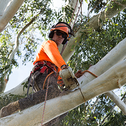 Tree Surgeon Kirrawee
