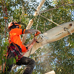 Tree Surgeon Engadine