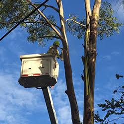Tree removal Jannali
