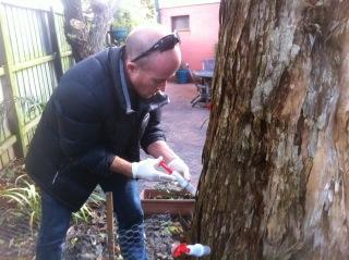 Sutherland Shire Level 5 Arborist