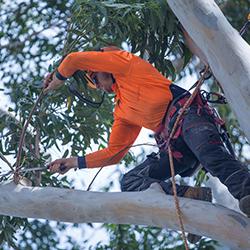 Sydney Arborist