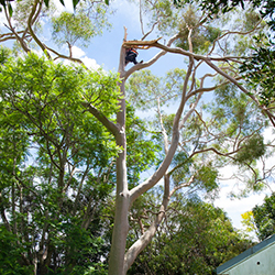 SES Tree Trimming