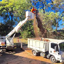 Tree lopping Miranda