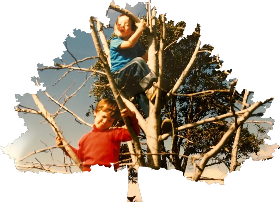 Sutherland Shire Tree lopping
