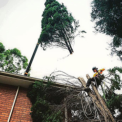 Tree crane removal sydney