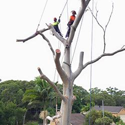 Tree cutting Sutherland