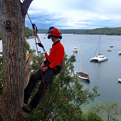 Tree lopping sutherland