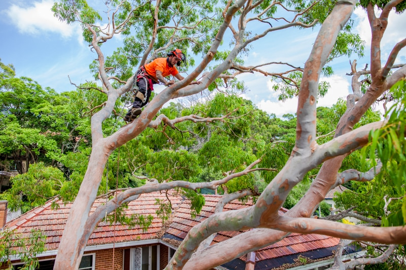 Hurstville City Council tree removal
