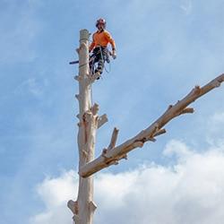 tree removal Yowie Bay