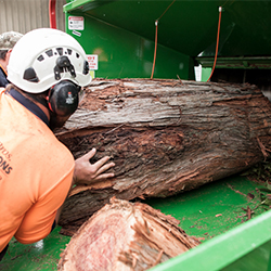 Tree removal hurstville