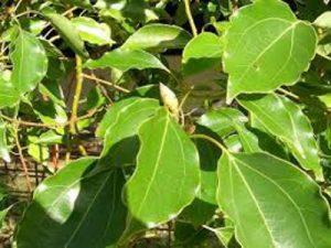 Arborist Wollongong