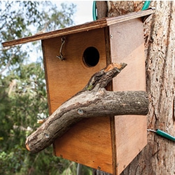 wildlife boxes