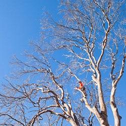 tree lopper Sydney