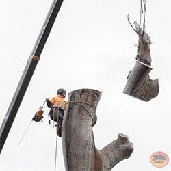 tree lopper Sutherland