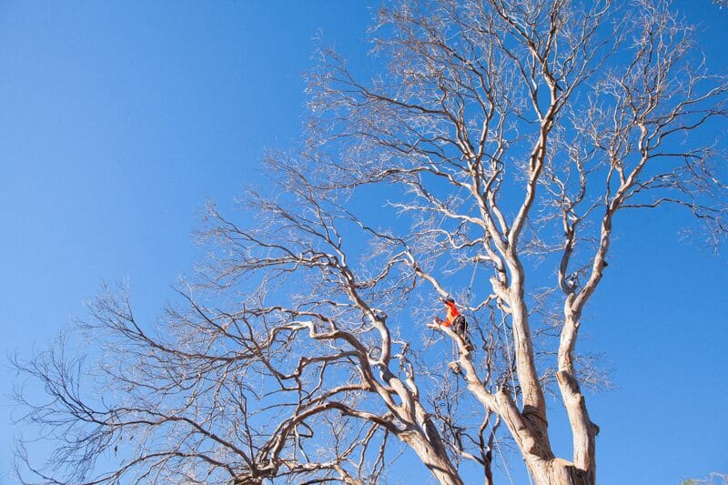 1050 tree