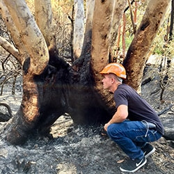 arborist Kirrawee