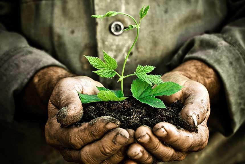 tree planting Sydney