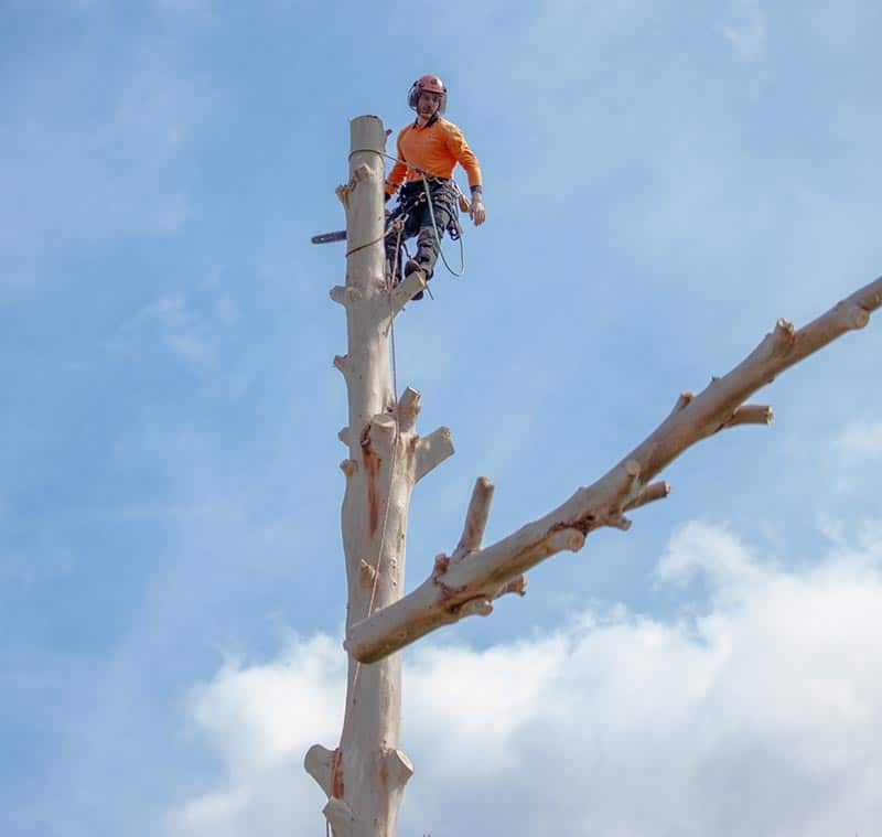 inner west tree service