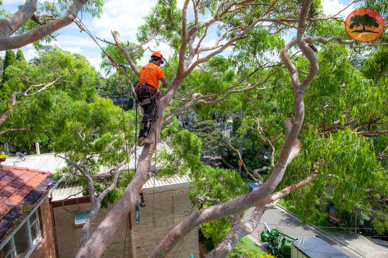 tree removal Bexley