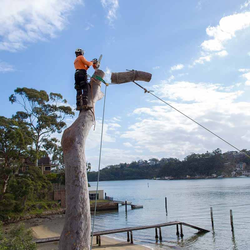 tree removal Georges river