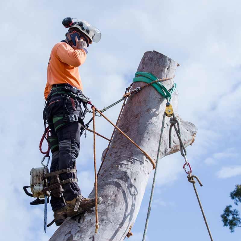 tree removal bayside