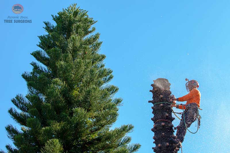 tree removal Sutherland shire