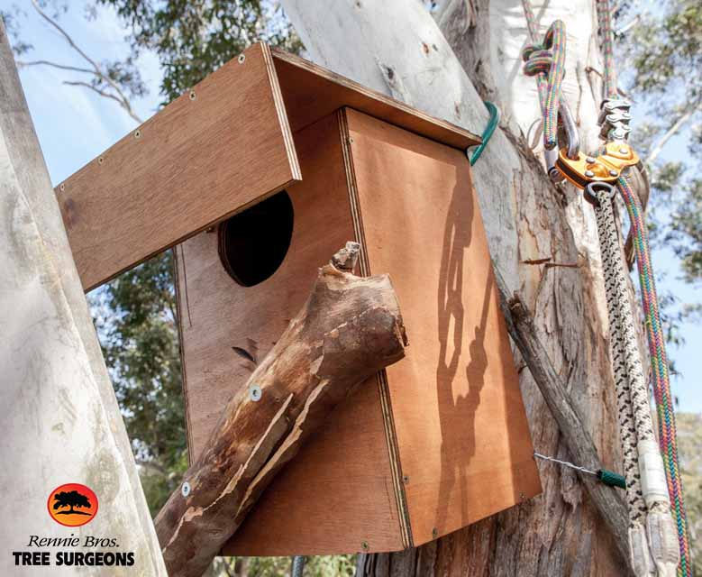 possum box Sydney