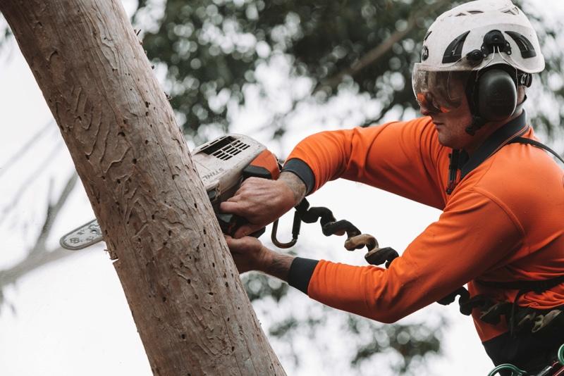 tree lopping Sutherland