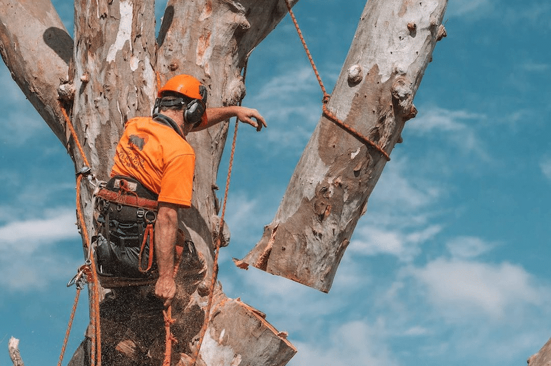 Sutherland Shire Tree Pruning