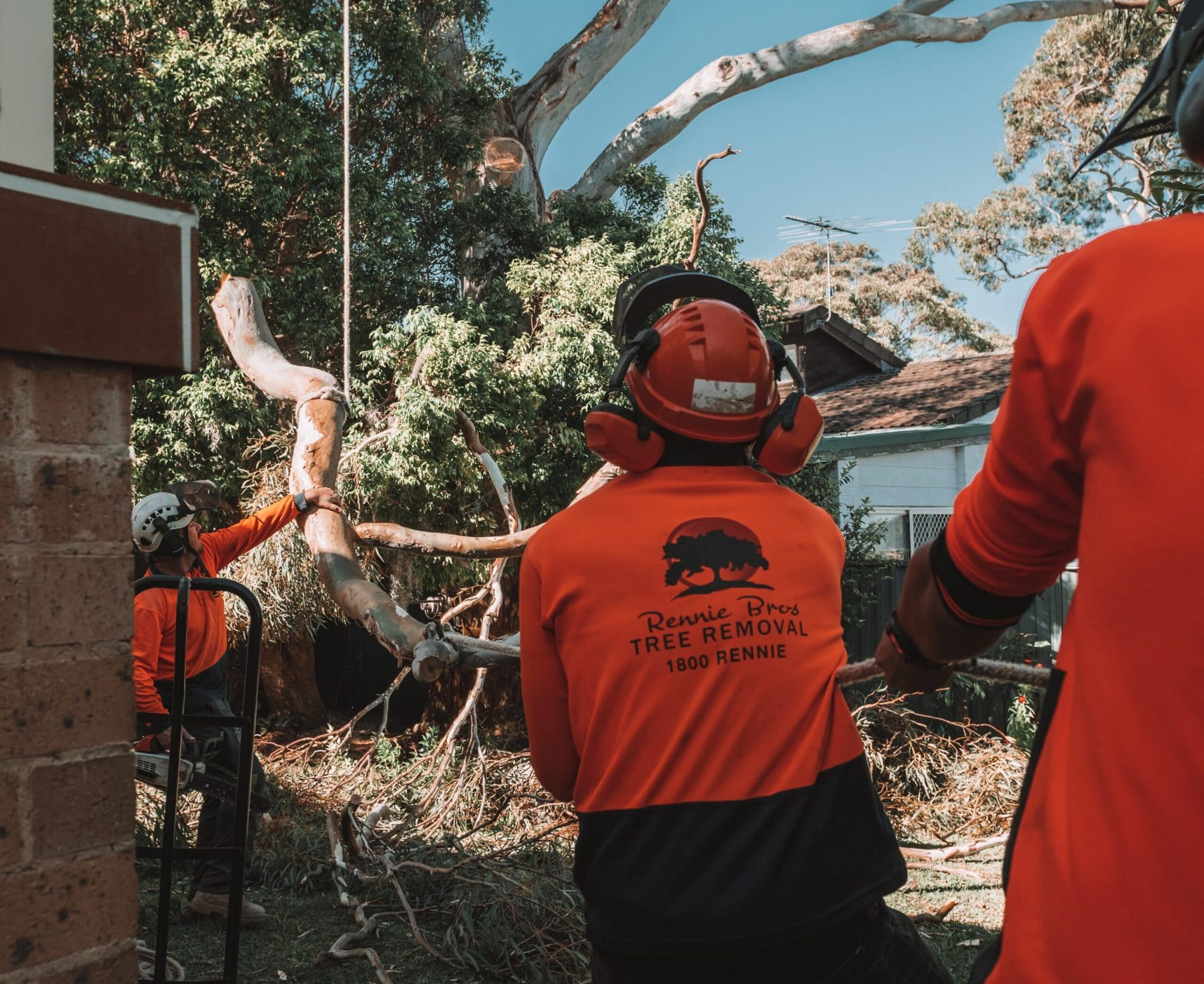 Sutherland Shire Tree Removal